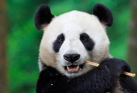 Как Panda 4.1 повлияет на вашу контент-стратегию