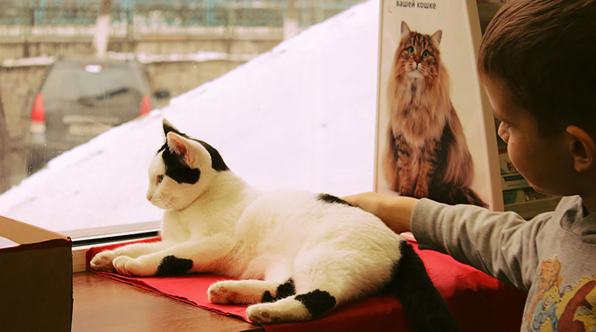 Высокомерие и презрение: как личные бренды котиков помогают продвигать котокафе
