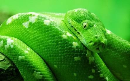 Алкомаркетинг: как продавать зеленого змея