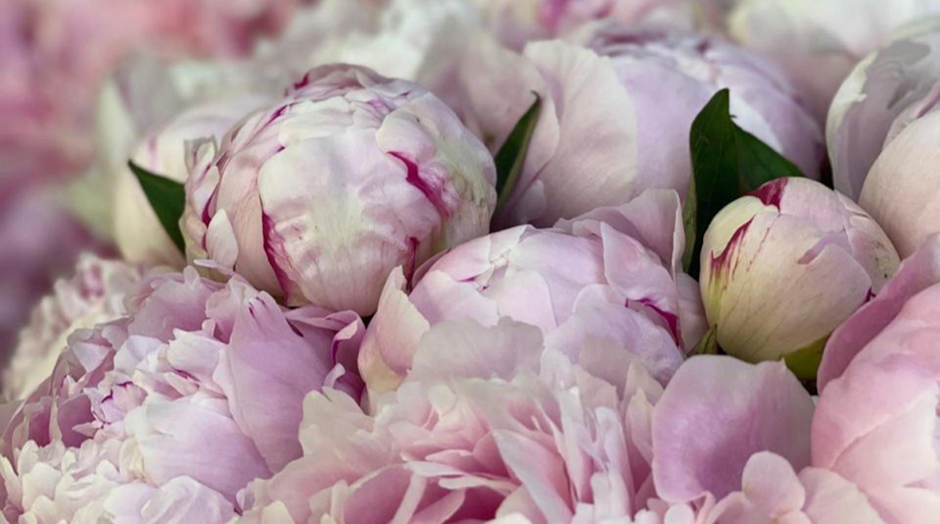 Пир во время чумы: как на гребне пандемии мы превратили небольшой цветочный в элитную доставку цветов