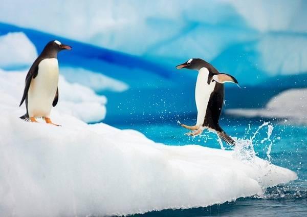 Как укротить «Пингвина»?