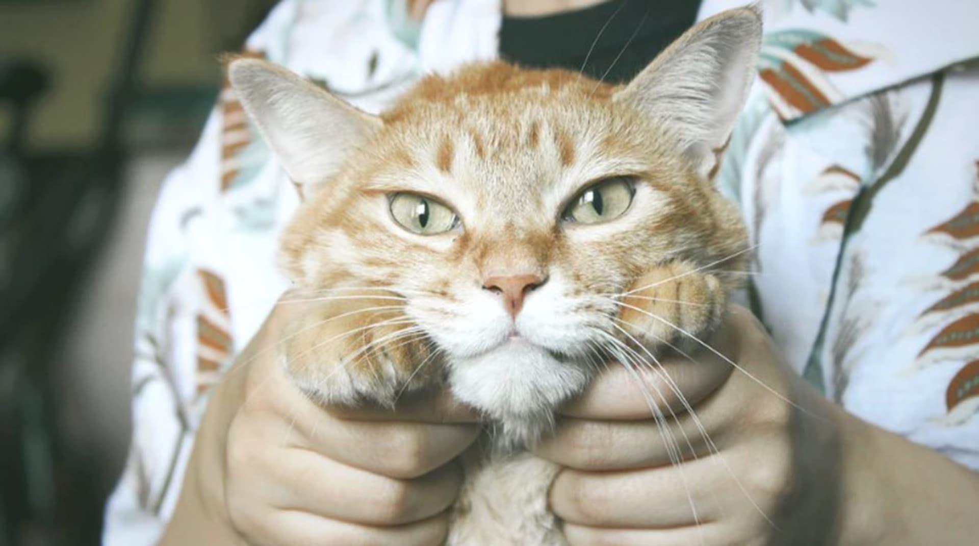 У меня лапки, и я зарабатываю в Instagram: топ наших котов-блогеров
