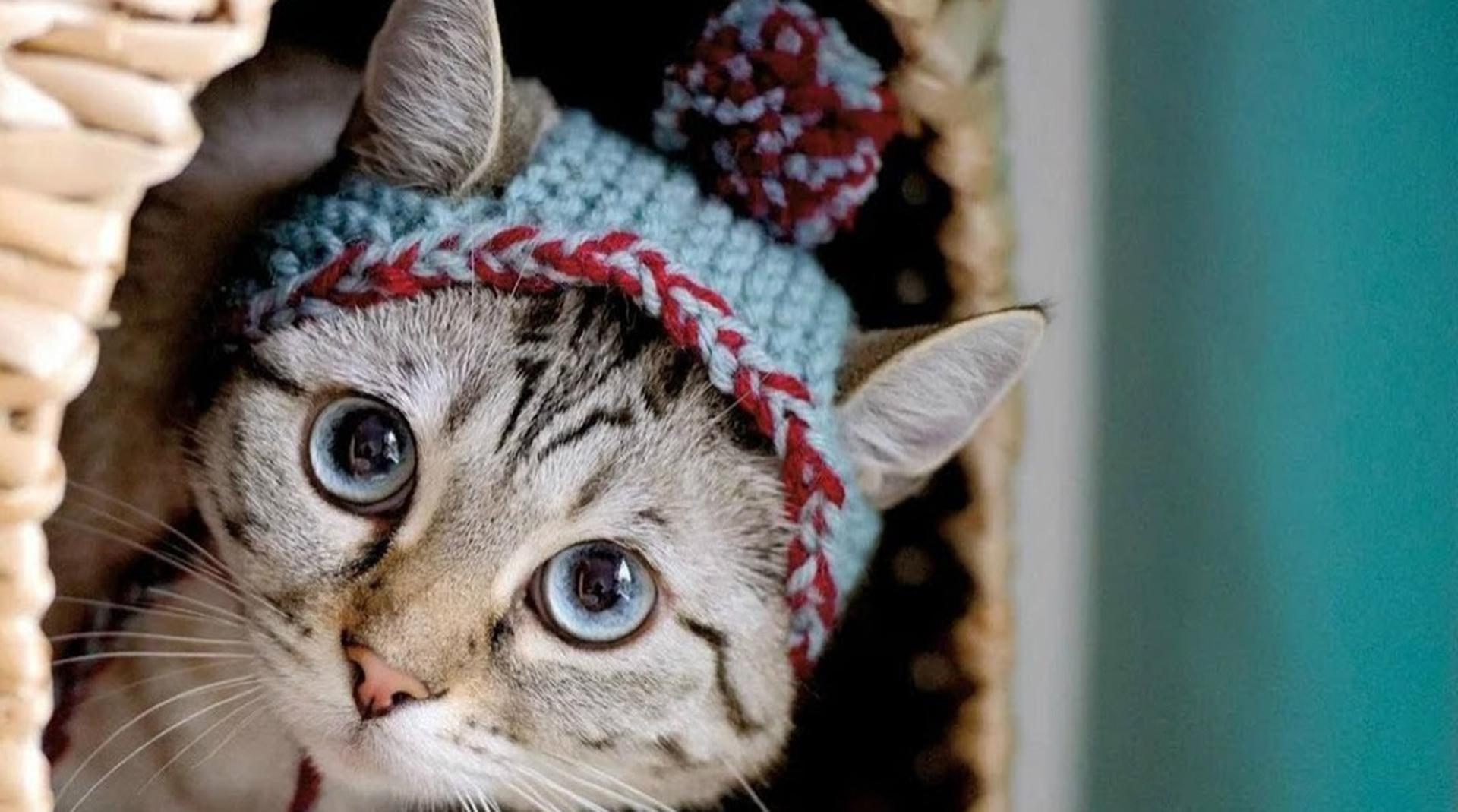 Правят миром: почему котикам в рекламе почти невозможно противостоять