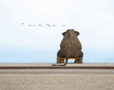 Купи слона! Эффективные призывы к действию в рекламе (call to action)