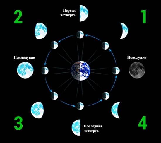 Основные фазы Лунного цикла: цифра 1 – Лунная «весна», цифра 2 – Лунное «лето», цифра 3 – Лунная «осень», цифра 4 – Лунная «зима»