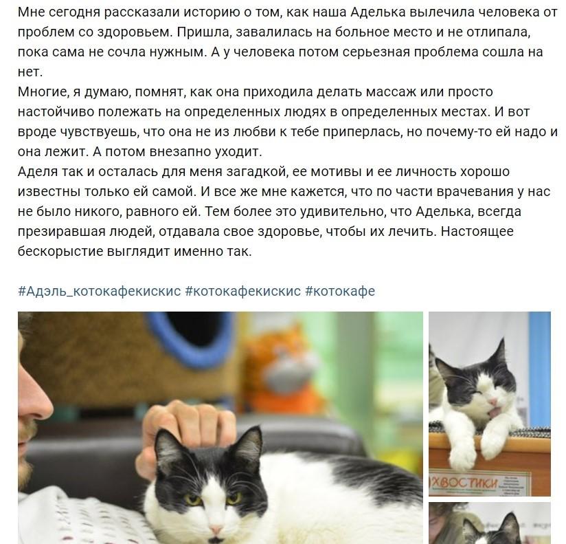 Жизнь кошки продолжилась в персонаже