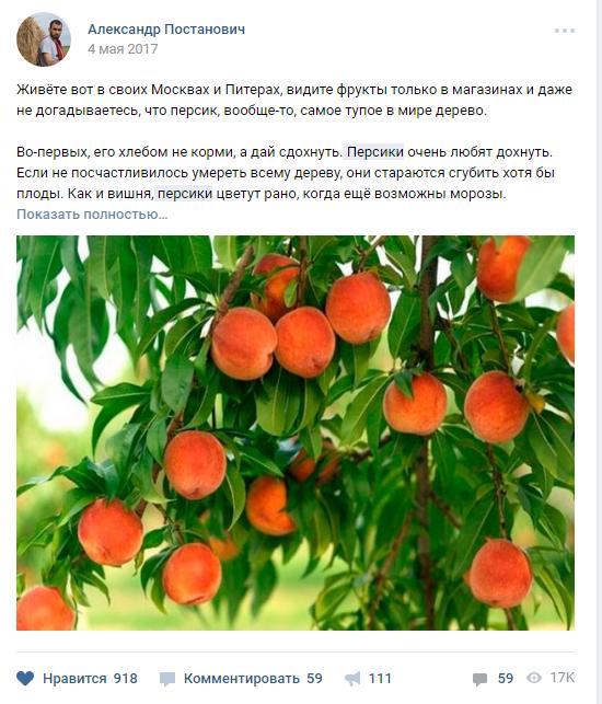 Пост про персики от Александра Постановича стал вирусным в ВК и ФБ