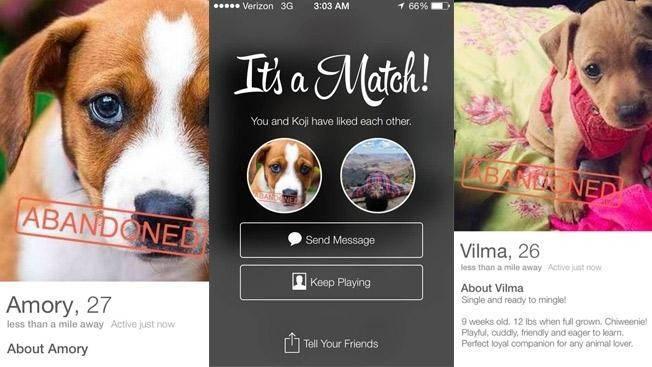 Такой сайт для знакомств способен осчастливить многих собак и людей. Очень здорово!