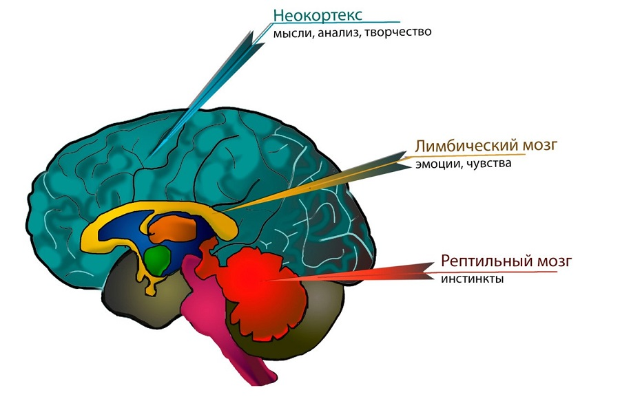 Совместимость с коучем проверять рептильным мозгом! Неокортекс и лимбический мозг не использовать.