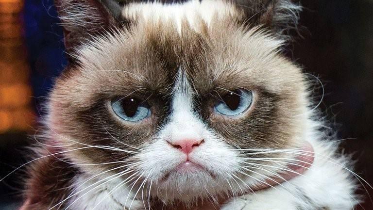 По мнению некоторых СМИ, Grumpy Cat принесла своей хозяйке более 100 млн. долларов