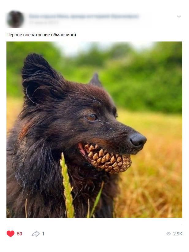 Смешные картинки менее популярны, чем фото природы