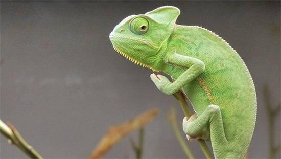 SEO-оптимизаторы так любят менять свой цвет, что не знают, какой их натуральный.