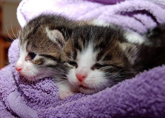 Котики привлекают трафик. Но что вы будете делать с любителями кошек на сайте, посвященном торговле на валютном рынке?