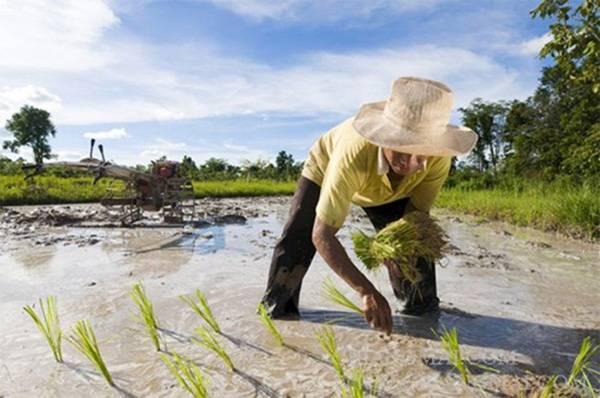 Лучше рис выращивать диетический, чем разметку внедрять семантическую