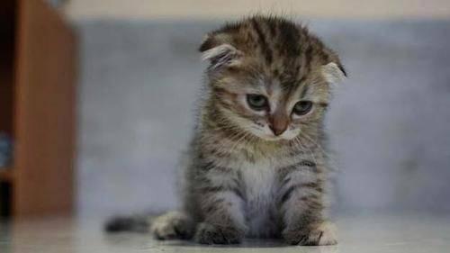 Не заставляйте грустить бедное животное…