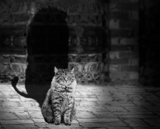 Тень — один из самых известных архетипов. Он накапливает черты личности, способы восприятия и поведения, которые человек подавляет в повседневной социальной жизни