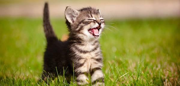 Мяу! Котиков любят все, чего не скажешь о RAID-массивах и промышленном клининге