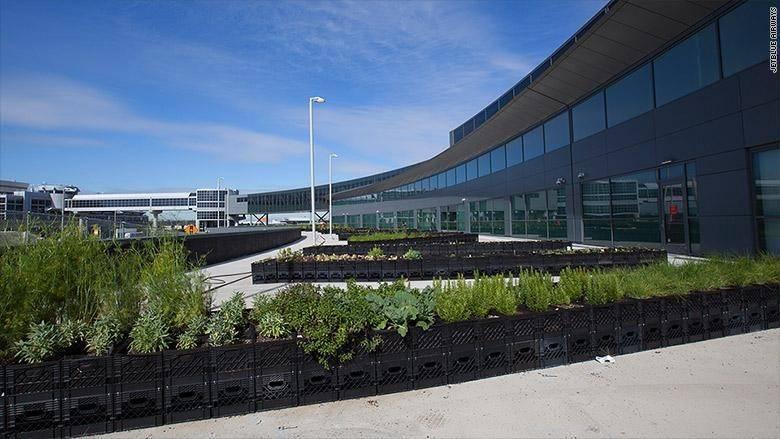 Органические продукты растут прямо в аэропорту Кеннеди