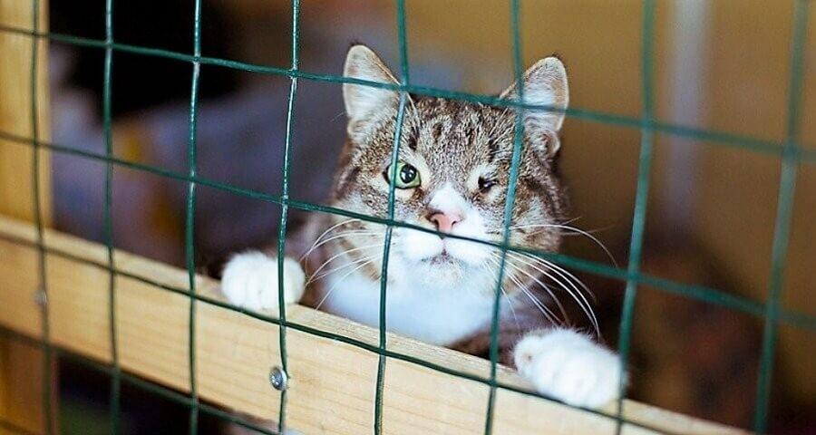 Четвертый пункт достижения больших финансовых целей: постите котиков :) У фонда «Ника» нет проблем и с этим «условием»
