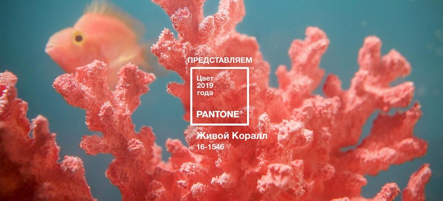 Pantone написал о том, где можно с успехом использовать этот «жизнеутверждающий цвет»